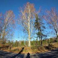 Осенний лес :: Валерий Талашов
