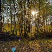 Октябрьское солнце :: Olcen Len