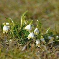 Весенние цветы :: Olcen Len