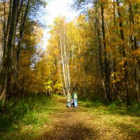 Осенний лес :: Татьяна Лобанова