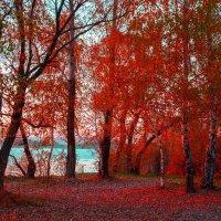 Какие краски царственно легли  узором дивным на опушке леса.. :: Виктор Малород