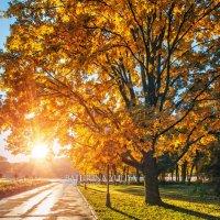 Дуб и солнце :: Юлия Батурина