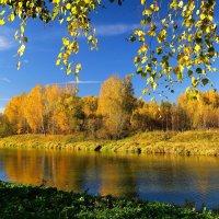 Осень в Подмосковье :: Андрей Куприянов