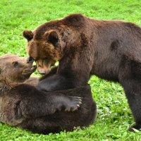 Медвежьи нежности :: Татьяна Каневская