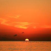 Караваны птиц над водой летят :: valeriy khlopunov