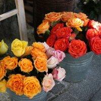 А розам и в этой посуде прекрасно! :: ZNatasha -