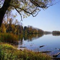 Лягушачий рай :: Наталия Григорьева