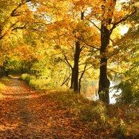 Осень в парке :: Татьяна Беляева