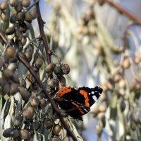последние бабочки :: Валерия Шамсутдинова