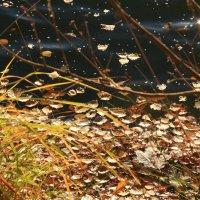 В холодной осенней воде :: Татьяна Ломтева