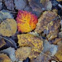 Осень :: Оксана Пучкова