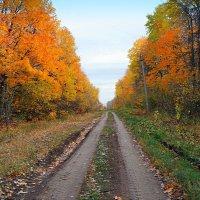Пути-дороги октября.. :: Андрей Заломленков