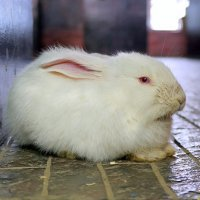 Следуй за белым кроликом!:) :: Андрей Заломленков