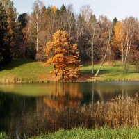 Цветная осень - вечер года... :: Ирина Румянцева