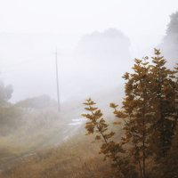Туман :: Виктория Левина