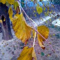 Осенние листья тютины :: Татьяна Королёва