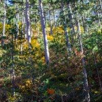 Солнышко в лесу! :: Варвара
