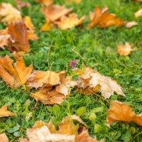 Осень :: Наталья Кузнецова