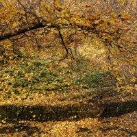 Осенний листопад ... :: Лариса Корженевская