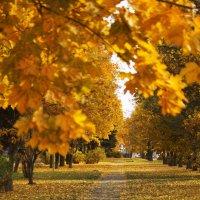 Осень :: Виктория Левина