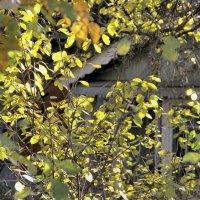 Осень. Старый дом :: Евгений Верзилин