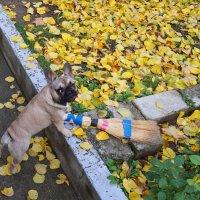 Осень намусорила, а мне убирать! :: Наташа С