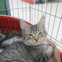 Котёнок Веня,2 месяца от роду,в добрые ручки. :: Зинаида