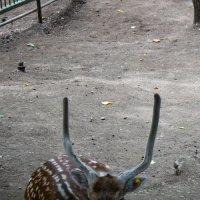В зоопарке на Кок-Тюбе :: Светлана SvetNika17