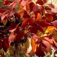 Красная осень :: Нина Бутко
