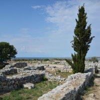 Кипарис в развалинах древнего города :: Наталья Покацкая