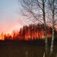 Vakaras / Evening :: silvestras gaiziunas gaiziunas