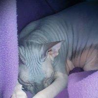 Мир спящим котам -2 :: Андрей Зайцев