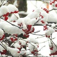 Второй снег. :: Александр Шимохин