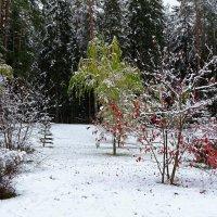 После снегопада :: Милешкин Владимир Алексеевич