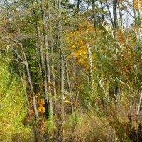 Октябрь в лесу :: Татьяна Лобанова