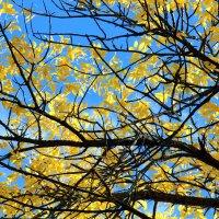 Изящество и красота осенних линий... :: Alika Demi