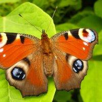 про разноцветные летающие цветы 3 :: Александр Прокудин