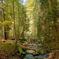 Лесной ручей :: Денис Масленников