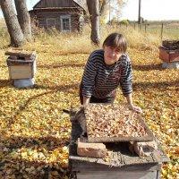 Сушка опят :: Светлана Рябова-Шатунова