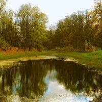 Золотая осень. :: Лия ☼