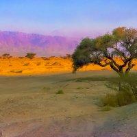 Пустыня Нэгев в районе Мёртвого моря :: Игорь Герман