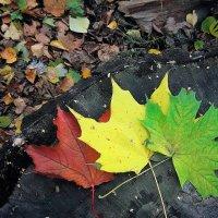 Только в октябре горят сразу все цвета светофора! :: Татьяна Помогалова
