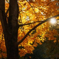 Ускользающая красота осени :: Nyusha