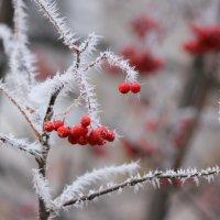 Морозные иголочки :: Ната Волга