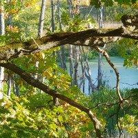 Колдовское озеро :: Анастасия Богатова