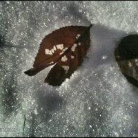 Снежок :: Анастасия Игошина