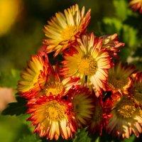 Ноябрьские  цветы :: Ty Gh .