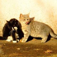 Забавные котята :: Андрей Снегерёв