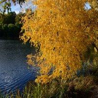 Осенью блеснёт красой берёзка над водой пруда осенней, синей! :: Ольга Русанова (olg-rusanowa2010)