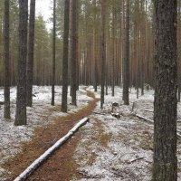 первый снег :: Алексей Логинов